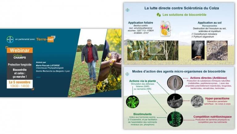 DE BOUCHE A OREILLE • Production d'un support de présentation pour animer un webinaire sur le biocontrôle pour BAYER.