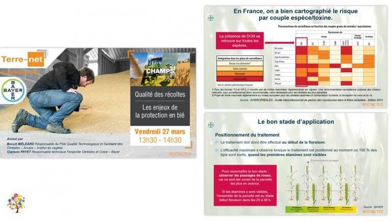 DE BOUCHE A OREILLE • Production d'un support de présentation pour animer un webinaire Les enjeux de la protection en blé pour BAYER.